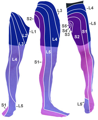 Lower-dermatomes